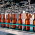 Beer bottles filling on the conveyor belt in the brewery factory